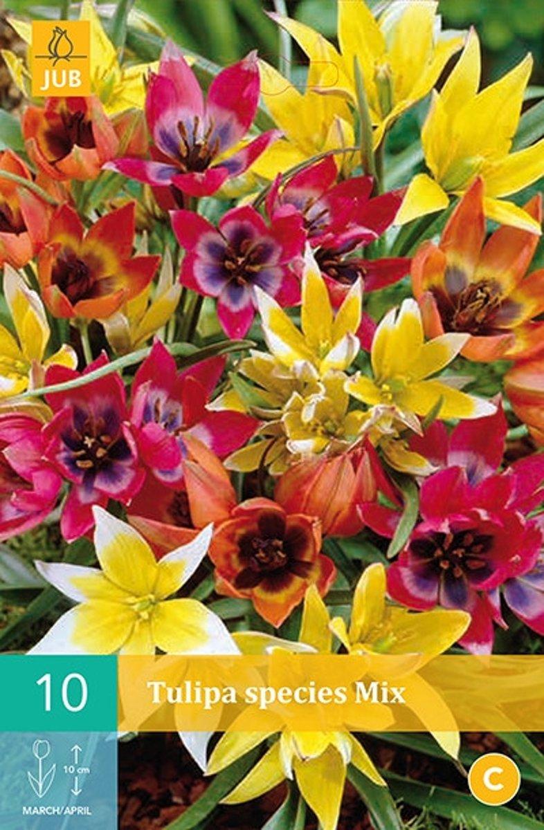 Tulipa Species mix - botanische tulp - set van 50 stuks kopen
