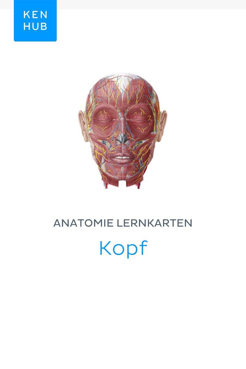 bol.com | Anatomie Lernkarten: Kopf (ebook), Kenhub | 9783962982027 ...
