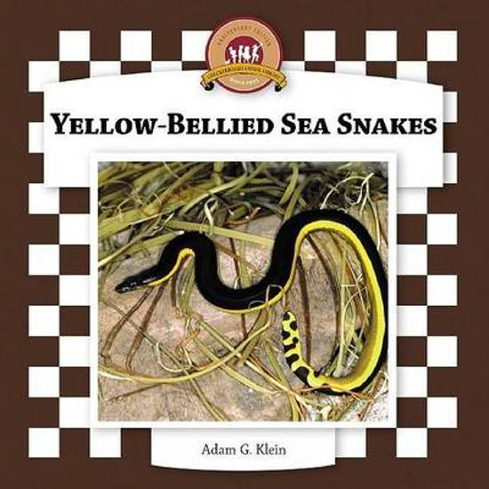Yellow-Bellied Sea Snakes