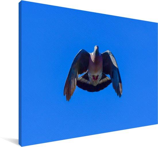 Foto van een houtduif tijdens de vlucht met een blauwe hemel Canvas 120x80 cm - Foto print op Canvas schilderij (Wanddecoratie woonkamer / slaapkamer)