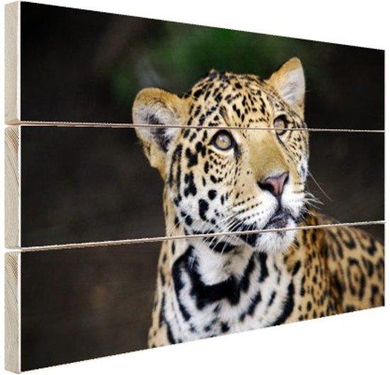 Nieuwsgierige luipaard foto Hout 160x120 cm - Foto print op Hout (Wanddecoratie) XXL / Groot formaat!