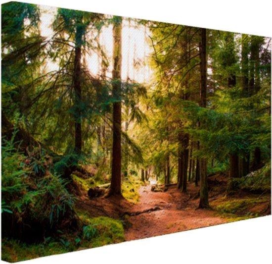 Een bospaadje door Amerikaans bos Canvas 30x20 cm - Foto print op Canvas schilderij (Wanddecoratie)