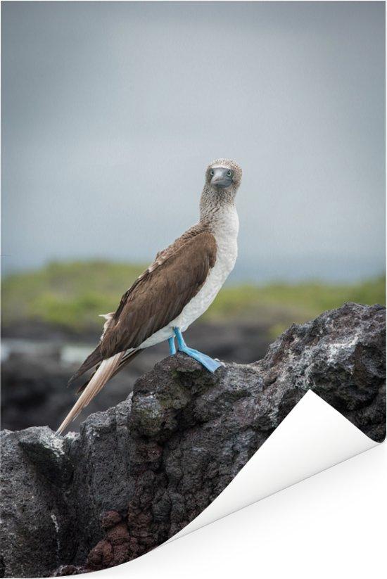 Zijaanzicht van en Blauw voet booby op de Galapagos eilanden Poster 120x180 cm - Foto print op Poster (wanddecoratie woonkamer / slaapkamer) XXL / Groot formaat!