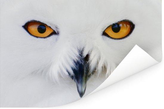 Close-up beeld van een sneeuwuil Poster 90x60 cm - Foto print op Poster (wanddecoratie woonkamer / slaapkamer)