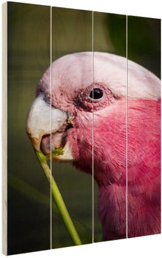 Roze kaketoe Hout 60x80 cm - Foto print op Hout (Wanddecoratie)