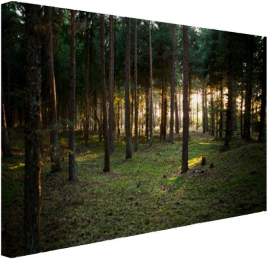 Zon die door bomen in bos schijnt Canvas 120x80 cm - Foto print op Canvas schilderij (Wanddecoratie)