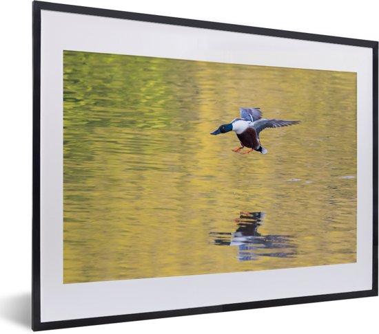 Foto in lijst - Reflectie van een vliegende slobeend fotolijst zwart met witte passe-partout klein 40x30 cm - Poster in lijst (Wanddecoratie woonkamer / slaapkamer)