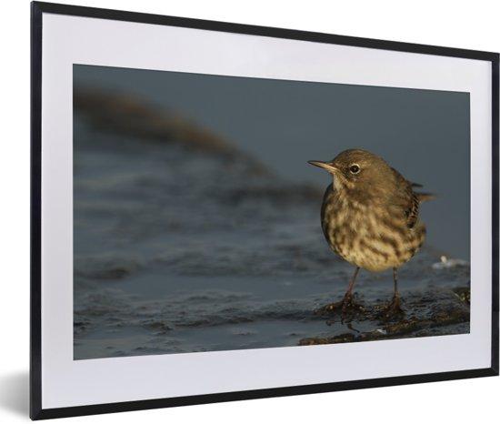Foto in lijst - Close-up van een oeverpieper aan het water fotolijst zwart met witte passe-partout 60x40 cm - Poster in lijst (Wanddecoratie woonkamer / slaapkamer)