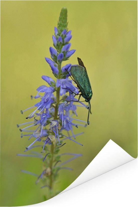 Paarse bloem van de lange ereprijs met een beest erop Poster 80x120 cm - Foto print op Poster (wanddecoratie woonkamer / slaapkamer)