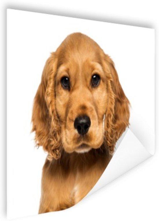 Close-up van een puppy Poster 180x120 cm - Foto print op Poster (wanddecoratie woonkamer / slaapkamer) / Dieren Poster XXL / Groot formaat!