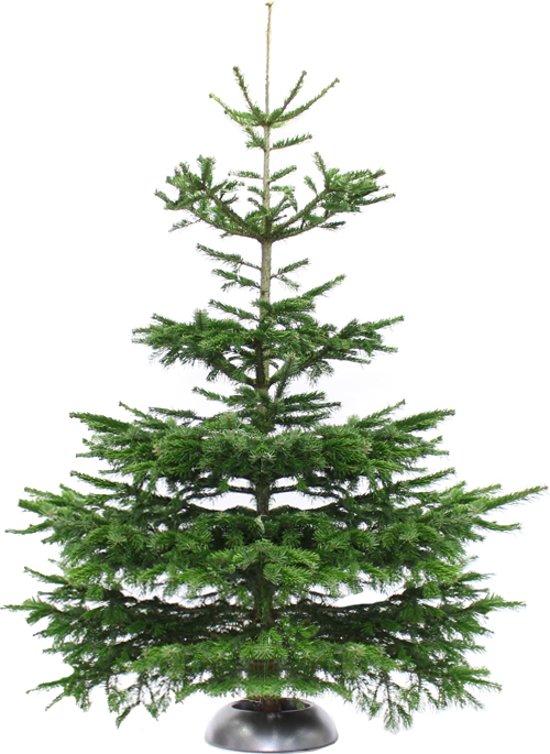 Bol Com Echte Kerstboom Nordmann Spar 2 75 3 Meter Zonder Kluit