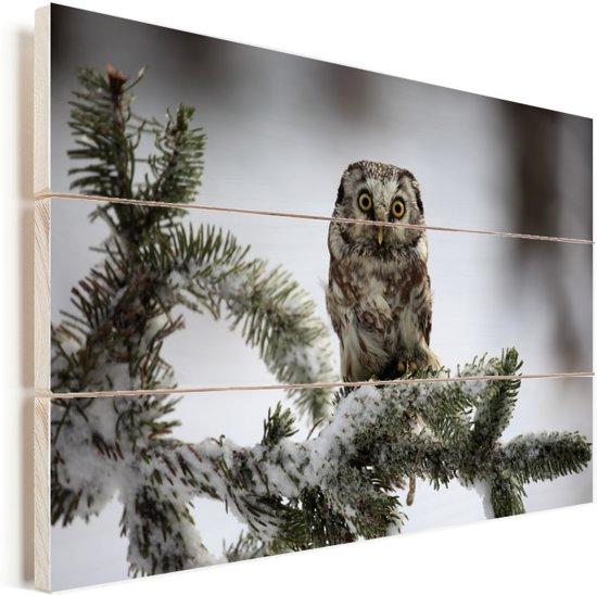 Ruigpootuil op een besneeuwde den in Tsjechië Vurenhout met planken 60x40 cm - Foto print op Hout (Wanddecoratie)