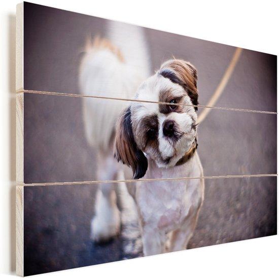 Een schattige Shih Tzu hond Vurenhout met planken 120x80 cm - Foto print op Hout (Wanddecoratie)