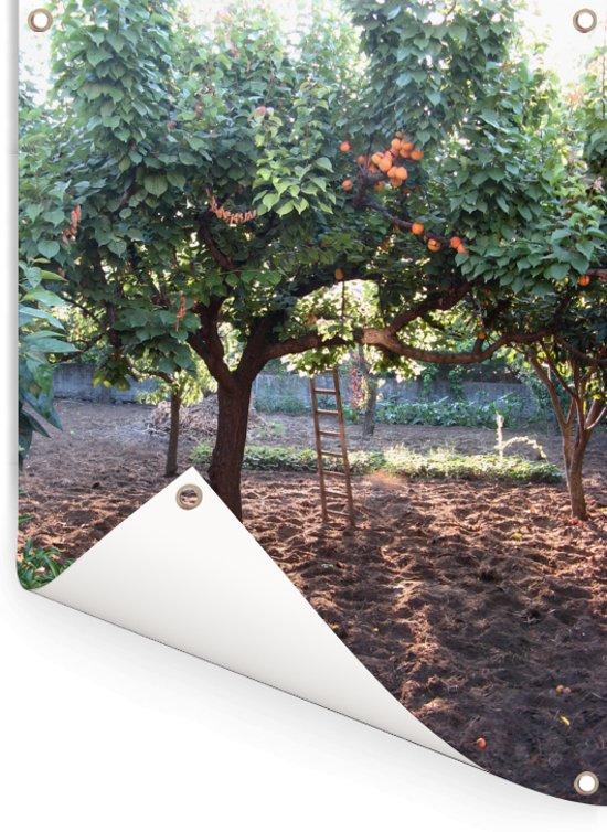 Bomen met rijpe abrikozen in zanderige boomgaard Tuinposter 60x80 cm - Tuindoek / Buitencanvas / Schilderijen voor buiten (tuin decoratie)