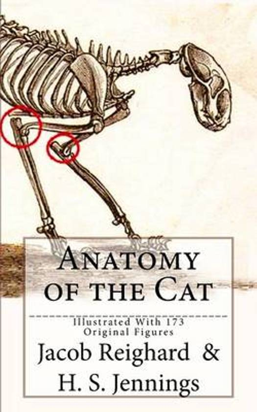 bol.com | Anatomy of the Cat | 9781539379478 | Jacob Reighard | Boeken