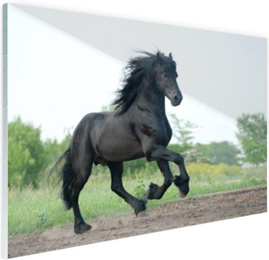 FotoCadeau.nl - Prachtig zwart paard Glas 60x40 cm - Foto print op Glas (Plexiglas wanddecoratie)