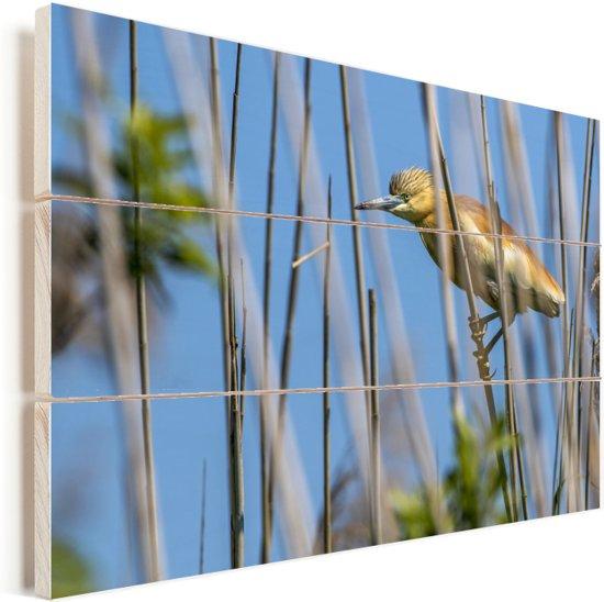 Ralreiger omringt door het riet Vurenhout met planken 90x60 cm - Foto print op Hout (Wanddecoratie)