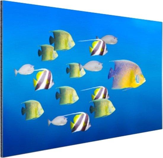 Grote vis leider van tropische vissen Aluminium 120x80 cm - Foto print op Aluminium (metaal wanddecoratie)