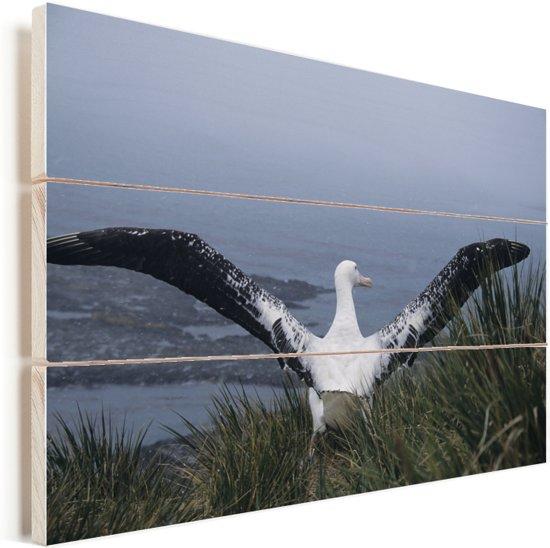 Reuzenalbatros spreidt zijn donkere vleugels Vurenhout met planken 90x60 cm - Foto print op Hout (Wanddecoratie)
