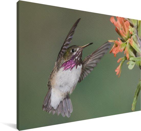 Een calliope kolibrie tijdens vlucht Canvas 60x40 cm - Foto print op Canvas schilderij (Wanddecoratie woonkamer / slaapkamer)