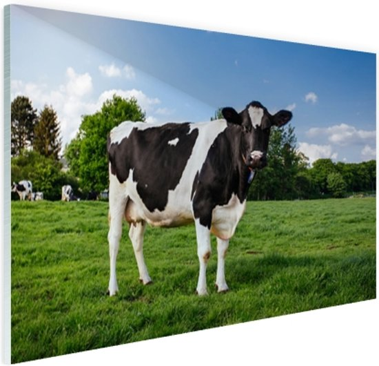 Zwart witte Koe Glas 60x40 cm - Foto print op Glas (Plexiglas wanddecoratie)