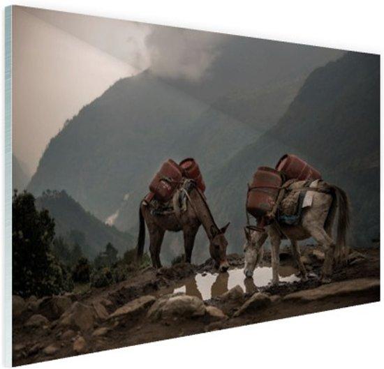 Ezels op een bergpad Glas 60x40 cm - Foto print op Glas (Plexiglas wanddecoratie)