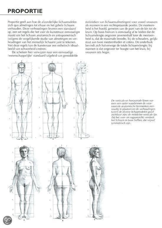 proporties menselijk lichaam