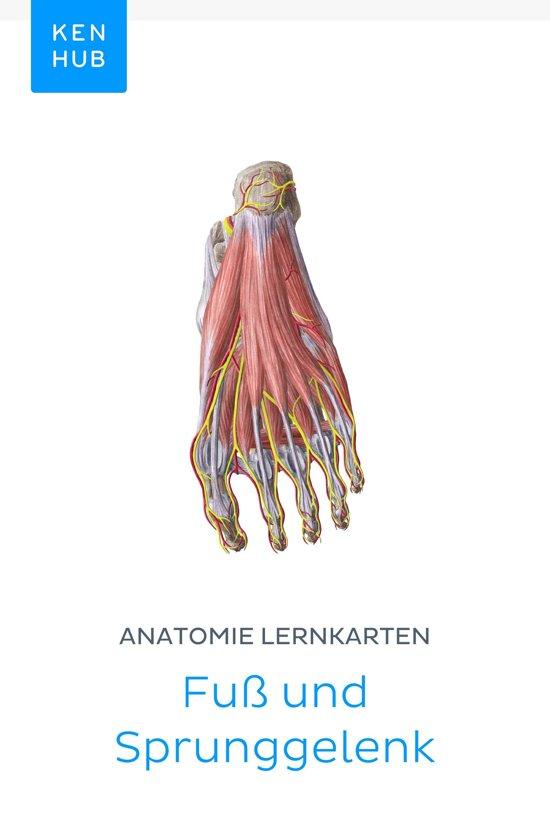 bol.com | Anatomie Lernkarten: Fuß und Sprunggelenk (ebook), Kenhub ...