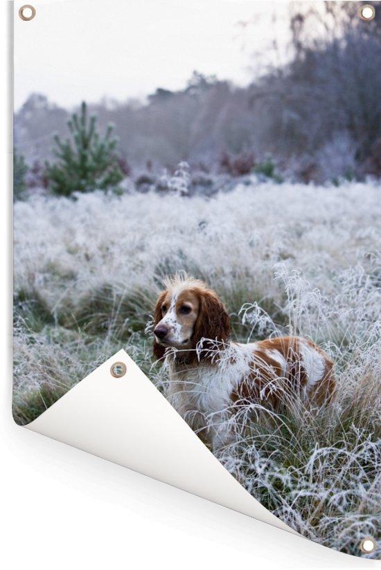 Engelse cockerspaniël in het bevroren gras Tuinposter 80x120 cm - Tuindoek / Buitencanvas / Schilderijen voor buiten (tuin decoratie)