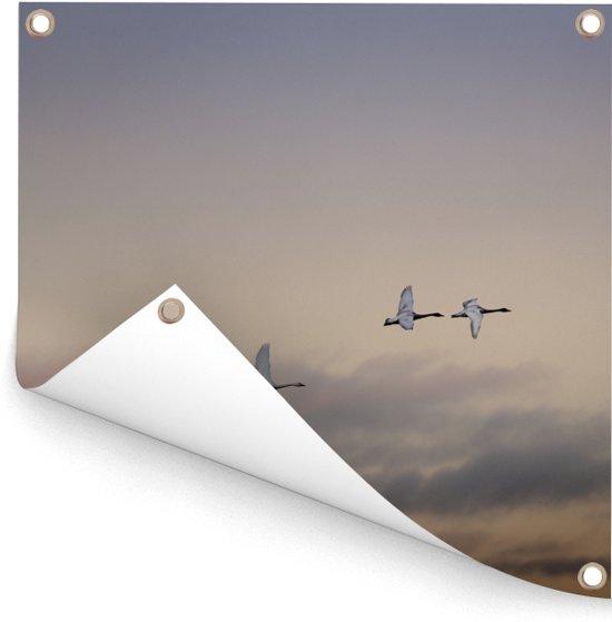 Vier kleine zwanen in de lucht Tuinposter 50x50 cm - klein - Tuindoek / Buitencanvas / Schilderijen voor buiten (tuin decoratie)