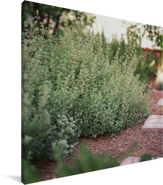 Wilde bos van worstkruid in een tuin Canvas 90x90 cm - Foto print op Canvas schilderij (Wanddecoratie woonkamer / slaapkamer)