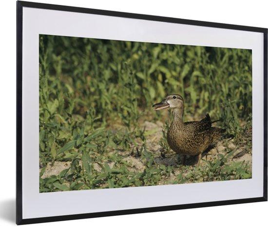 Foto in lijst - Blauwvleugeltaling met een groene achtergrond fotolijst zwart met witte passe-partout 60x40 cm - Poster in lijst (Wanddecoratie woonkamer / slaapkamer)