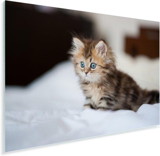 Schattige Perzische kitten Plexiglas 30x20 cm - klein - Foto print op Glas (Plexiglas wanddecoratie)