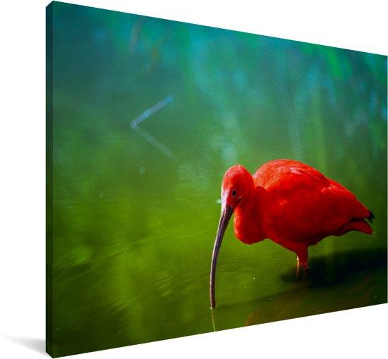Rode ibis in het water met een groene achtergrond Canvas 30x20 cm - klein - Foto print op Canvas schilderij (Wanddecoratie woonkamer / slaapkamer)