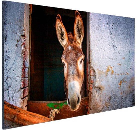 Ezel in de stal Aluminium 90x60 cm - Foto print op Aluminium (metaal wanddecoratie)