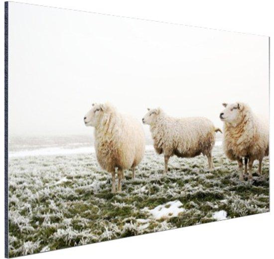 FotoCadeau.nl - Drie schapen in de winter Aluminium 90x60 cm - Foto print op Aluminium (metaal wanddecoratie)