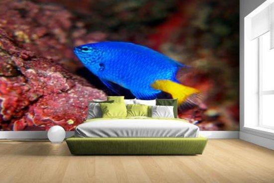 Behang Kinderkamer Vissen : Bol.com fotocadeau.nl exotische vis bij rood koraal fotobehang
