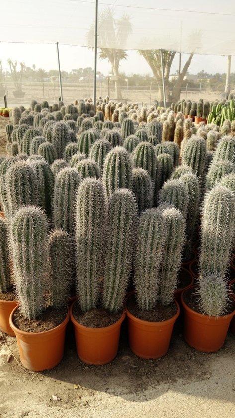 Potgrond Voor Cactussen.Bol Com Bioflor Cactus Potgrond 5 Liter Voor De Mooiste