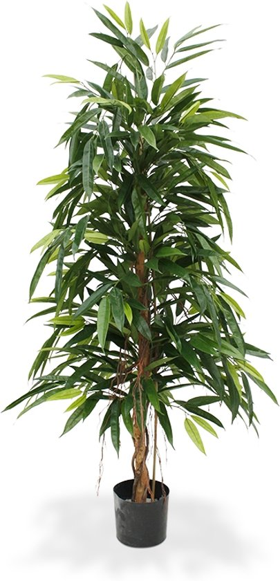 Longifolia Royal kunstboom 150 cm