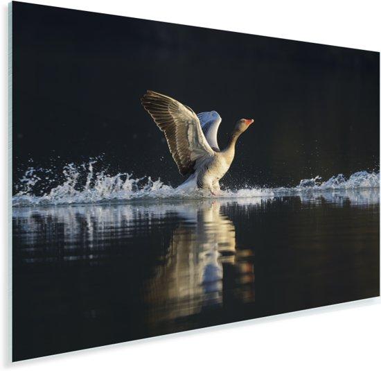 Een grauwe gans landt in het water Plexiglas 60x40 cm - Foto print op Glas (Plexiglas wanddecoratie)