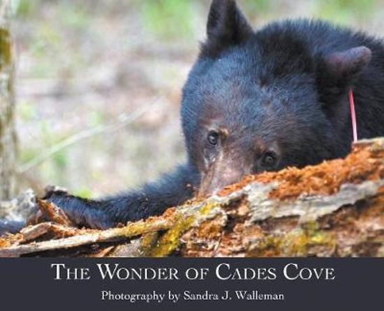 The Wonder of Cades Cove