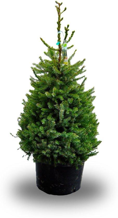 Bol Com Echte Kerstboom Met Kluit In Pot Omorika 150 Cm 10cm