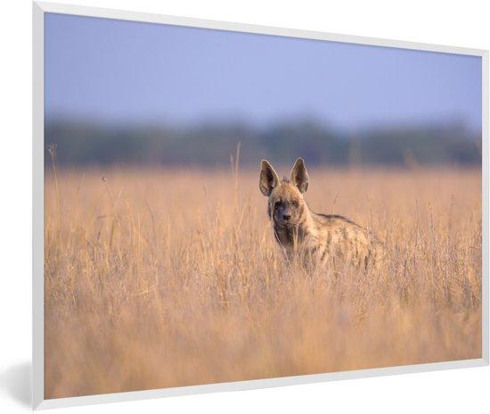 Foto in lijst - Hyena zit tussen het hoge gras in Azië fotolijst wit 60x40 cm - Poster in lijst (Wanddecoratie woonkamer / slaapkamer)
