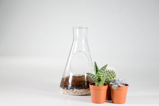 Suck UK Chemistry Terrarium Kit
