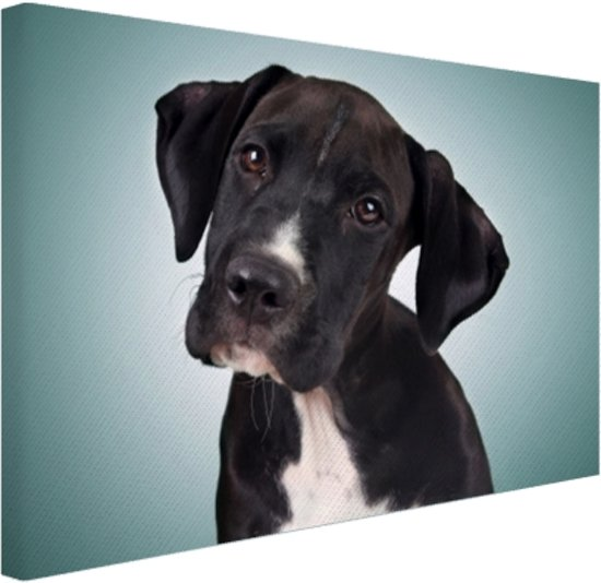 FotoCadeau.nl - Lieve zwart-witte hond Canvas 80x60 cm - Foto print op Canvas schilderij (Wanddecoratie)