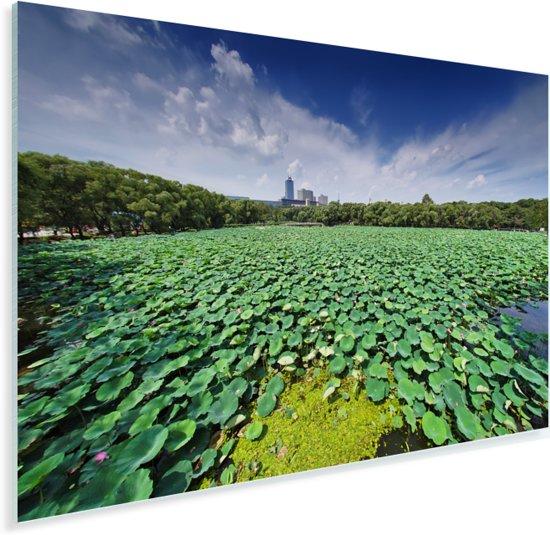 Groene waterlelies in het meer van Changchun in China Plexiglas 30x20 cm - klein - Foto print op Glas (Plexiglas wanddecoratie)