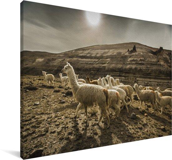 Lama's bij de Colca Canyon in Peru Canvas 90x60 cm - Foto print op Canvas schilderij (Wanddecoratie woonkamer / slaapkamer)