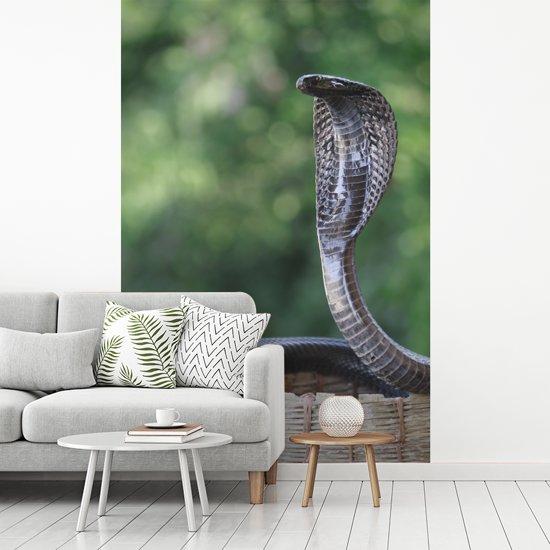 Fotobehang vinyl - Een magische Cobra in een rietenmand breedte 270 cm x hoogte 400 cm - Foto print op behang (in 7 formaten beschikbaar)