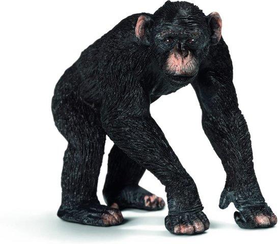 Mannelijke Chimpansee