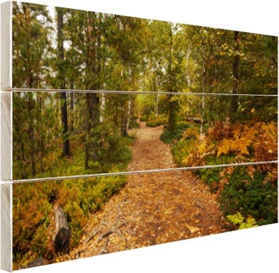Een bospad vol met bladeren Hout 160x120 cm - Foto print op Hout (Wanddecoratie) XXL / Groot formaat!